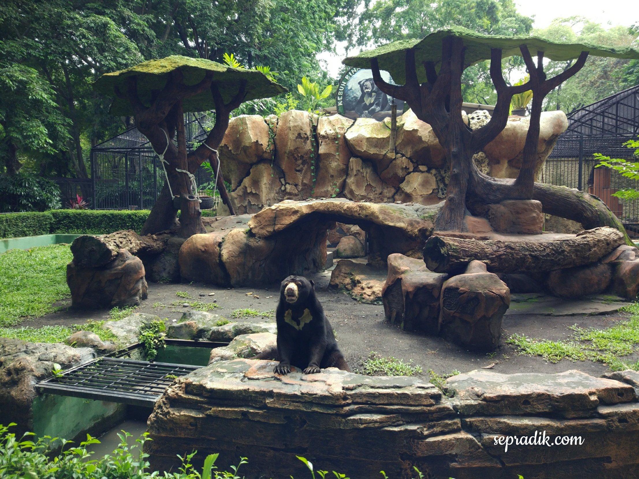 Kebun Binatang Surabaya 2017